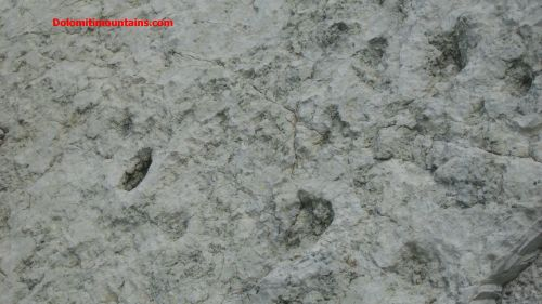 geology of dolomites dinosaur footprints