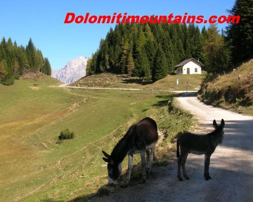 donkeys on path